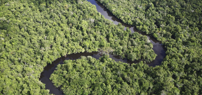 Could Indigenous rights be the key to saving our rainforests?