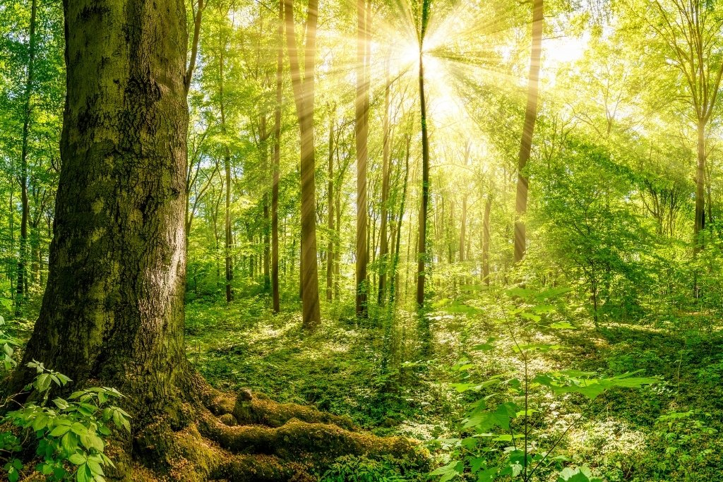 Climate Positive Business Light Through the Trees