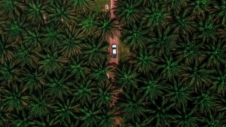 The Problem with Palm Oil